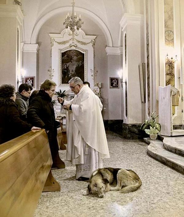 El perro que acude a la iglesia cada día