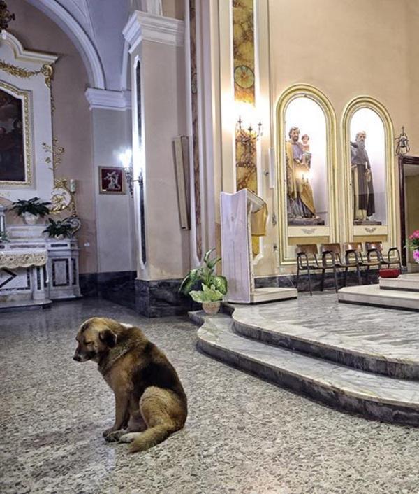 Tommy, el perro que acude a la iglesia cada día